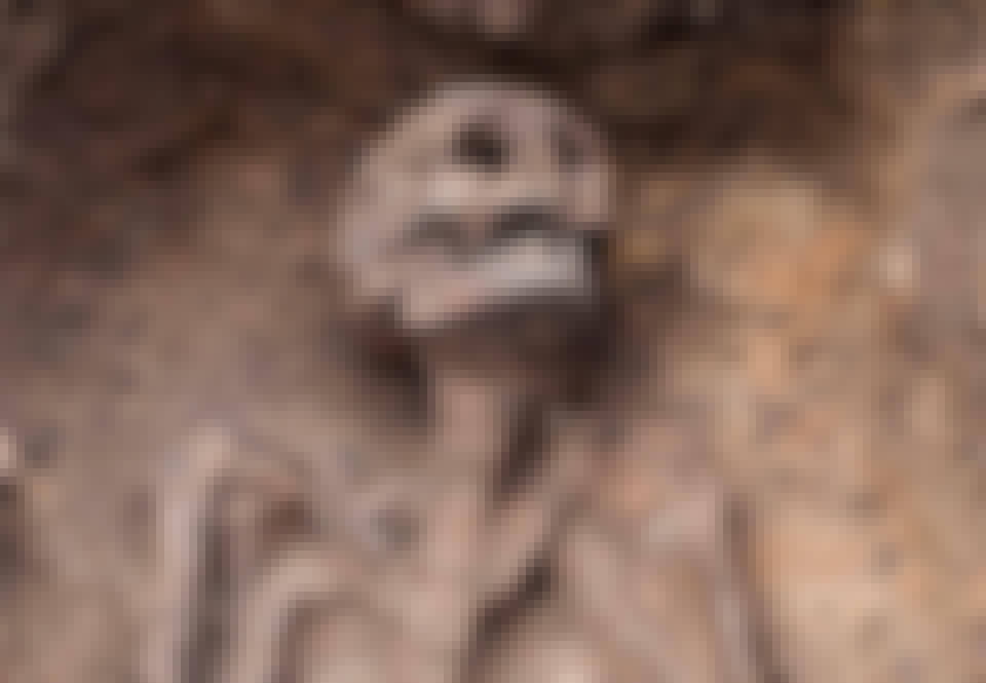 Gammalt skelett