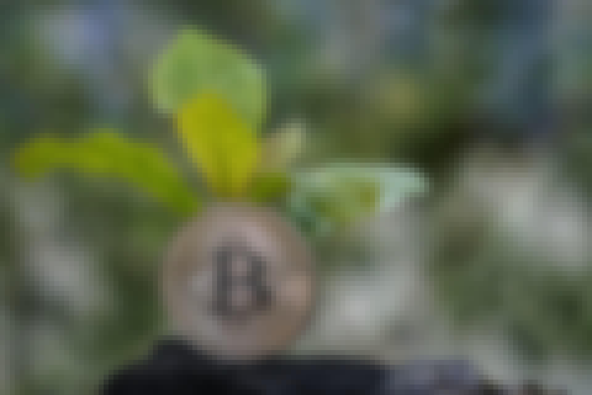Bitcoin og plante