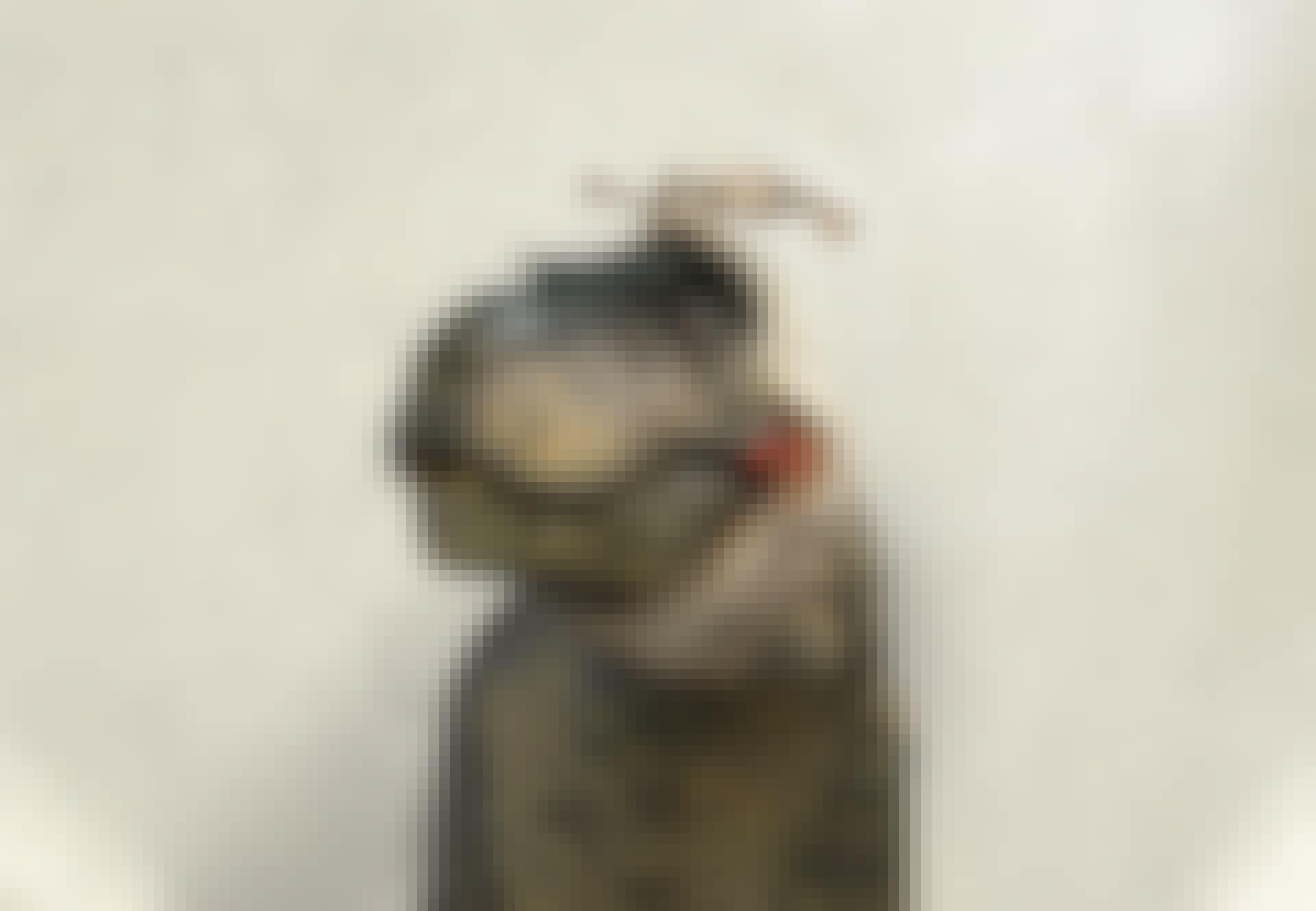 Sjuka dinosaurier Tyrannosaurus rex tandvärk