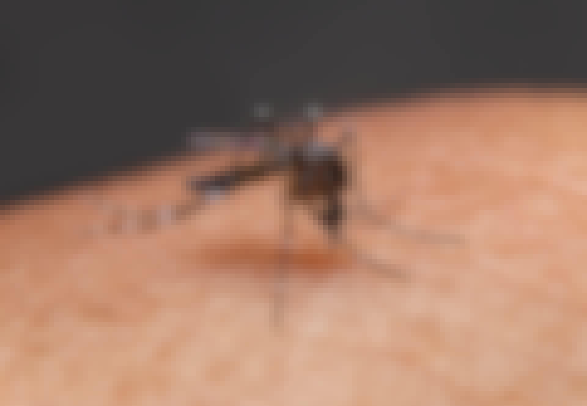 Myg stikker menneske