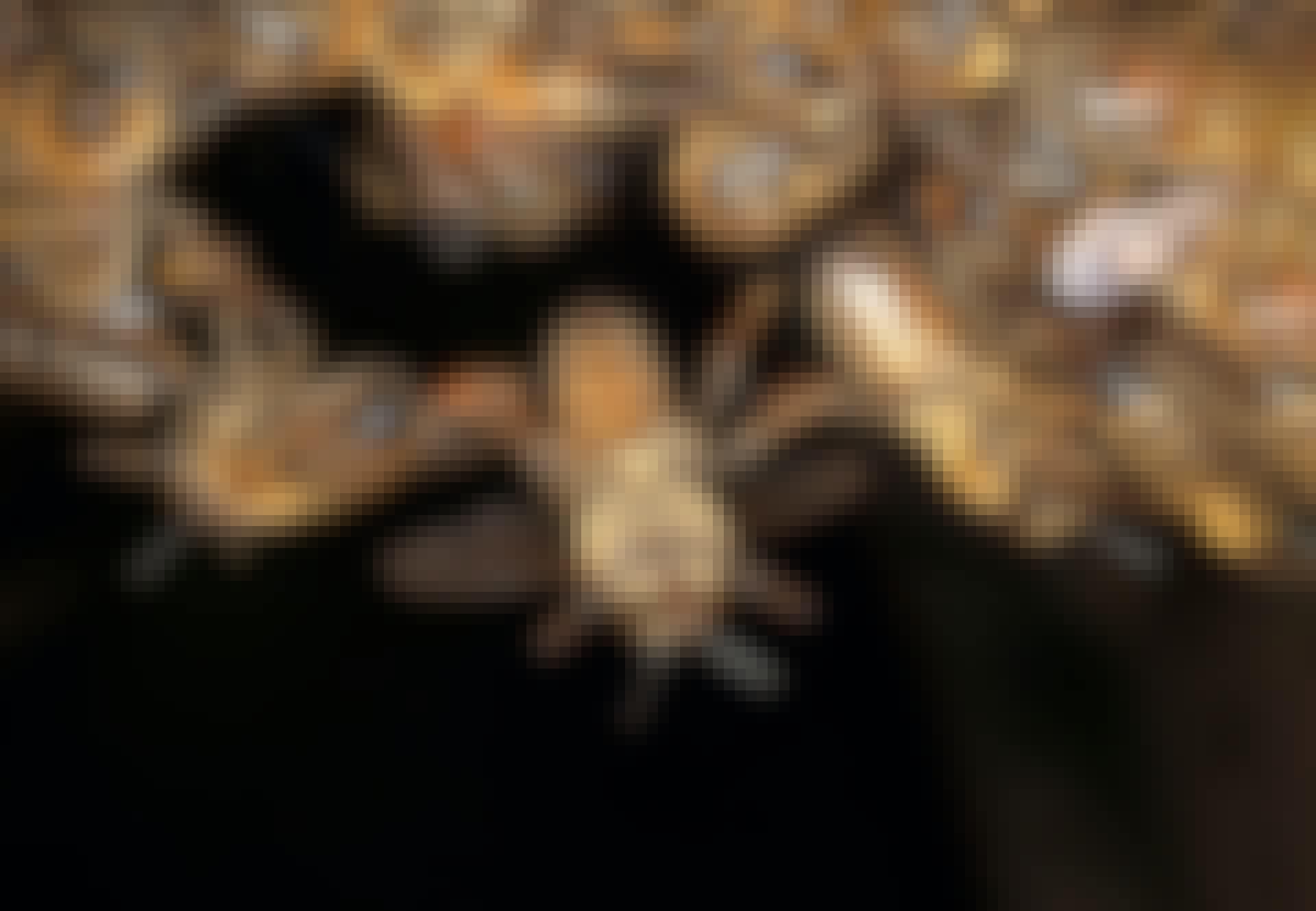 Bier danner kæde