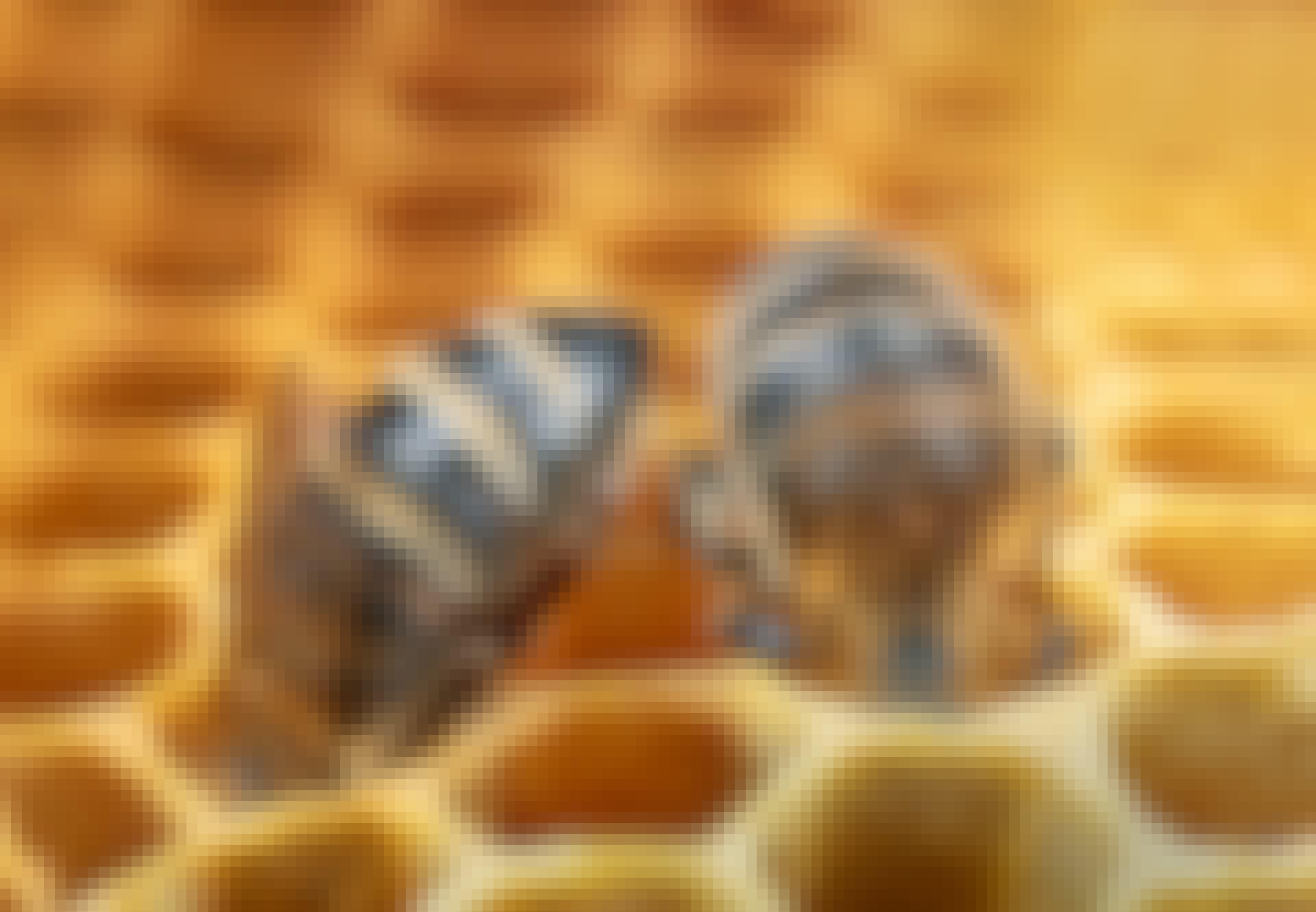 Mehiläiset siivoavat kennostoa