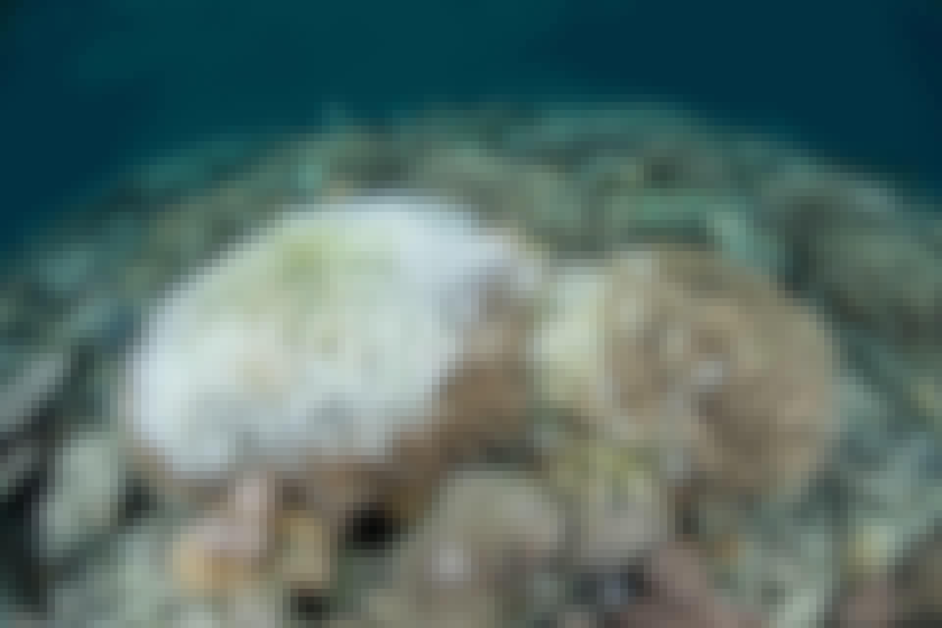 Blegede koraller i korallrev