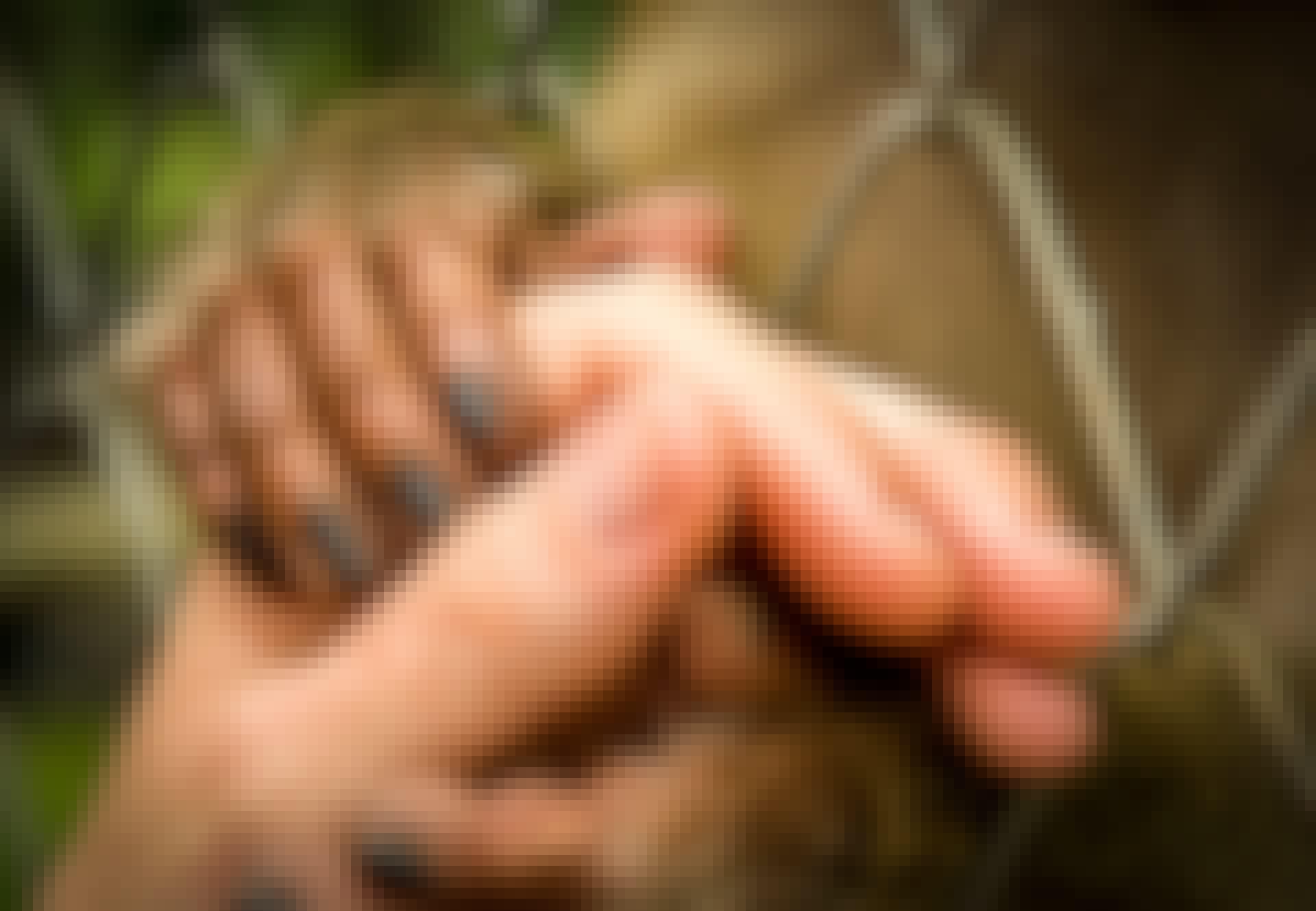Apina pitää ihmistä kädestä