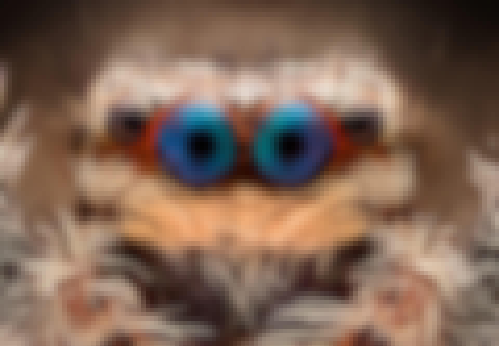 Hämähäkin silmä lähikuvassa