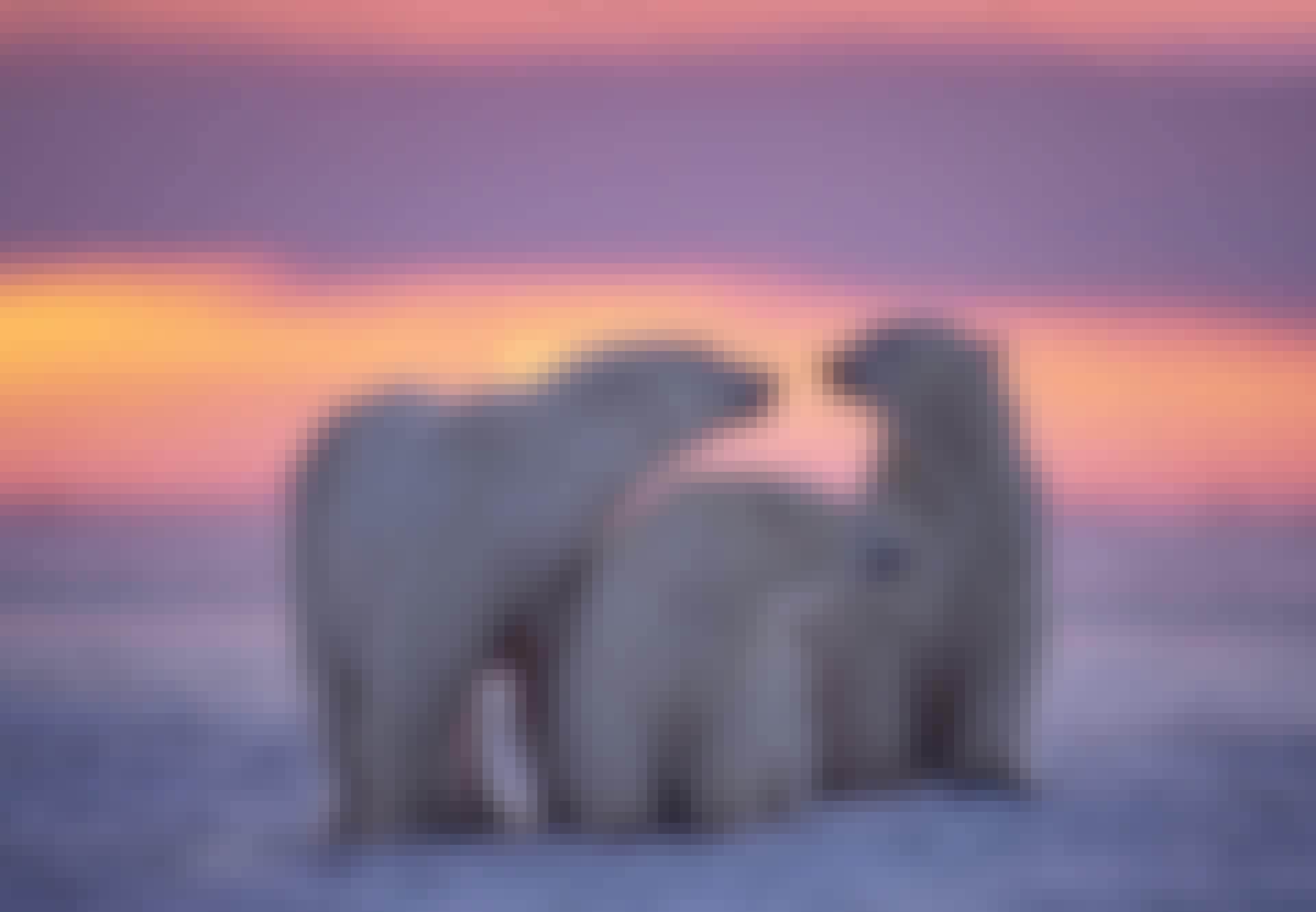 Jääkarhuperhe auringonlaskussa