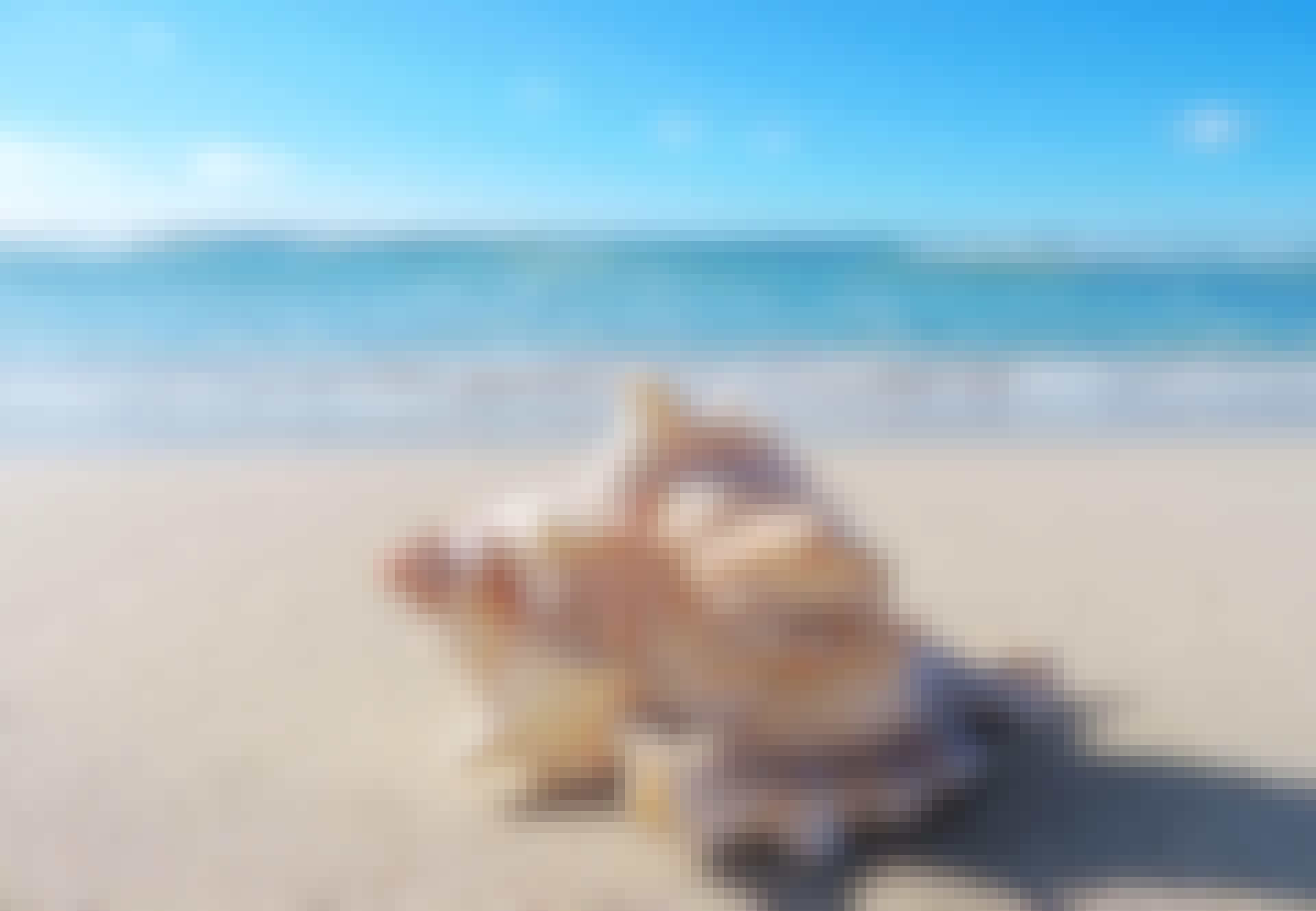 Snäcka-på-strand