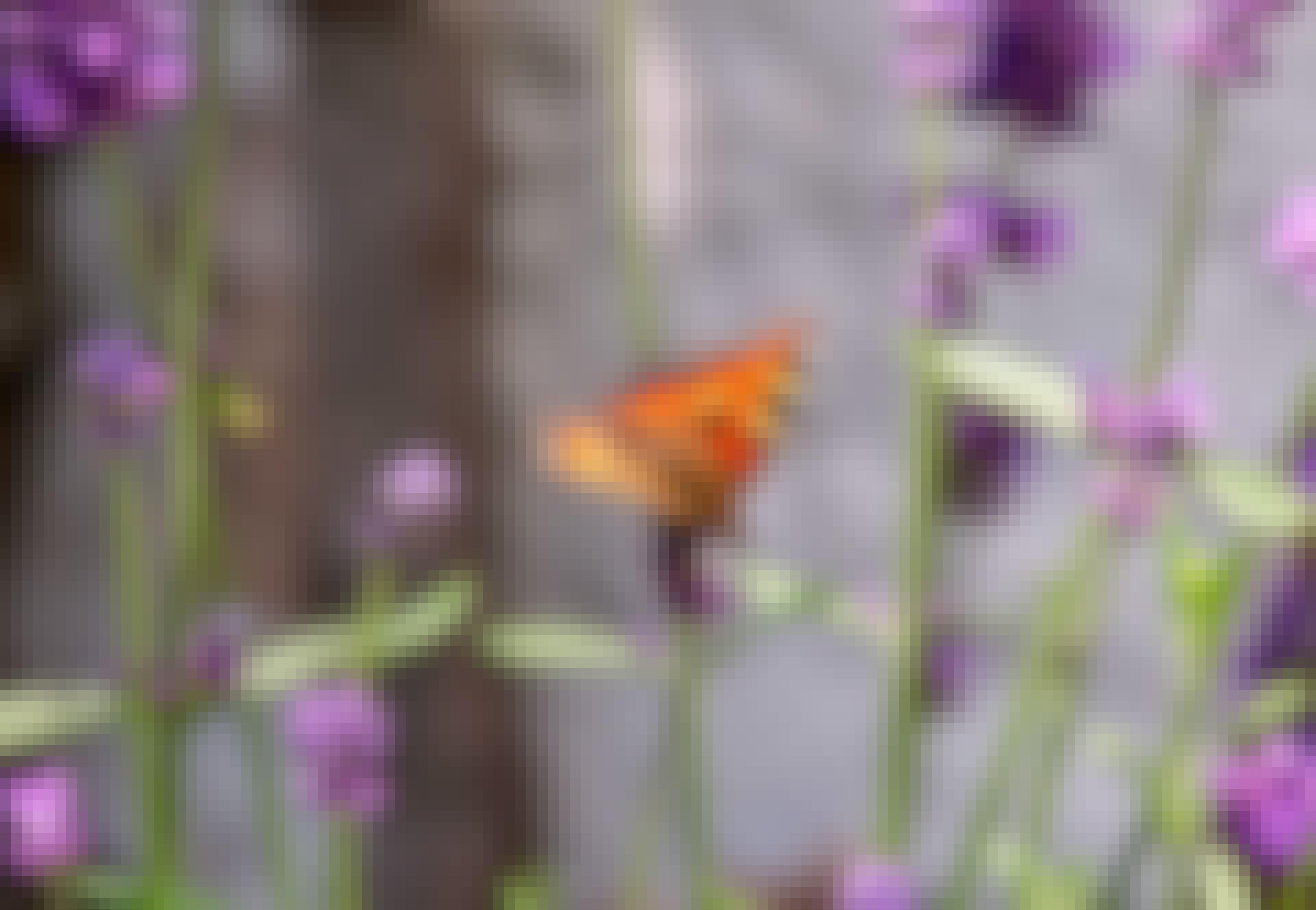 vlinder zit op een bloem